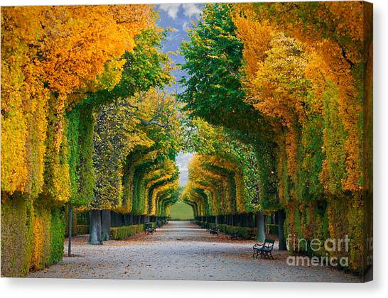 Bush Canvas Print - Long Road In Autumn Park by Badahos