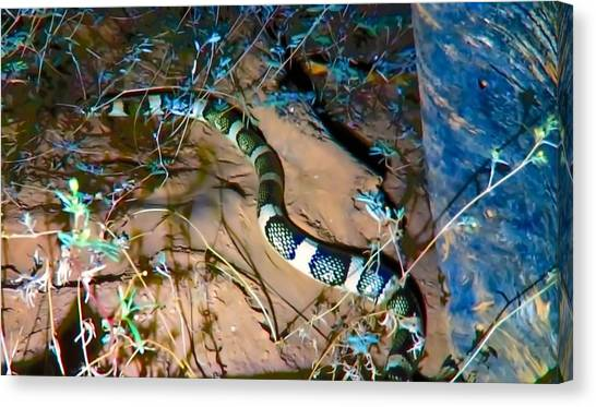 Canvas Print featuring the photograph Longnosed Snake By A Desert Wash by Judy Kennedy