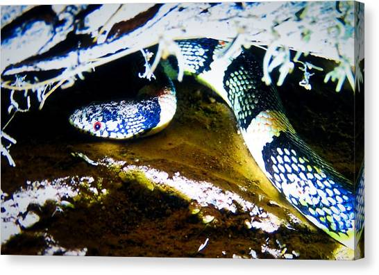 Canvas Print featuring the photograph Longnosed Snake In The Desert by Judy Kennedy