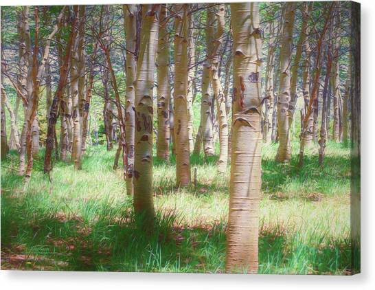 Lost In The Woods - Kenosha Pass, Colorado Canvas Print