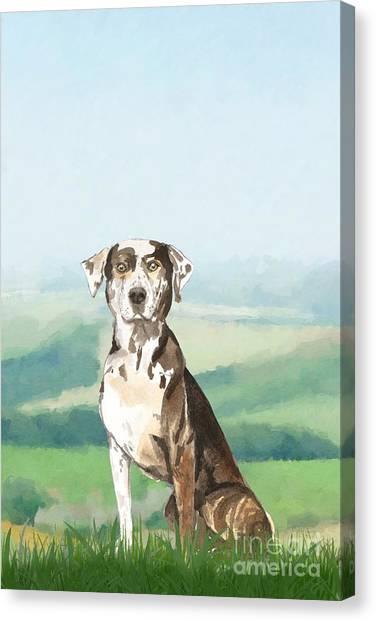 Purebred Canvas Print - Louisiana Catahoula Leopard Dog by John Edwards