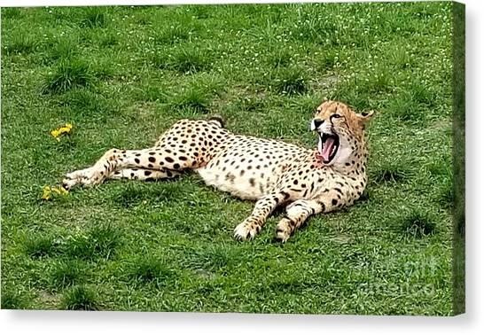Lounging Cheetah Canvas Print