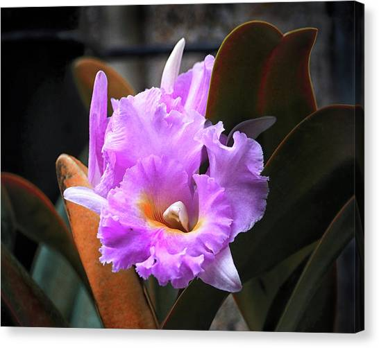 Canvas Print featuring the photograph Love Letter Orchid by Bill Swartwout Fine Art Photography