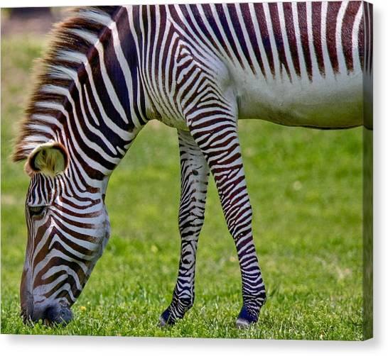 Love Zebras Canvas Print