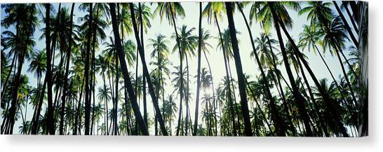 Canvas Print - Low Angle View Of Coconut Palm Trees by Panoramic Images
