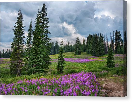 Colorado Rockies Canvas Print - Lupine Filled Meadow In The Colorado Rockies. by Dave Dilli