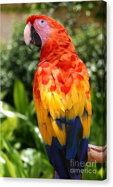 Macaw Sitting On A Branch Canvas Print by Paul Banton