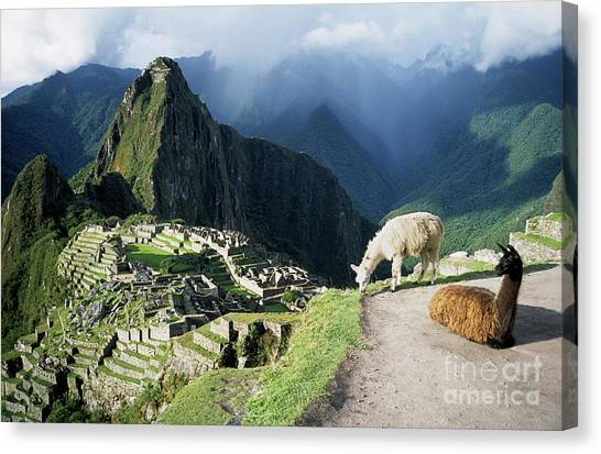 Peruvian Canvas Print - Machu Picchu And Llamas by James Brunker