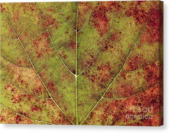 Change Canvas Print - Macro Detail And Veins Of An Autumn Leaf by Ehrman Photographic