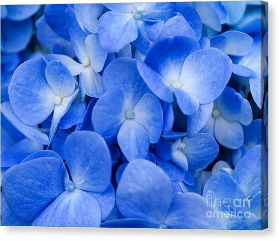 Bush Canvas Print - Macro Image Of Blue Hydrangea Flower by Noppharat Studio 969