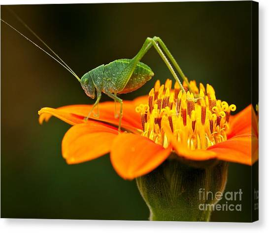 Bug Canvas Print - Macro Photos From Insects, Nature And by Dudu Linhares