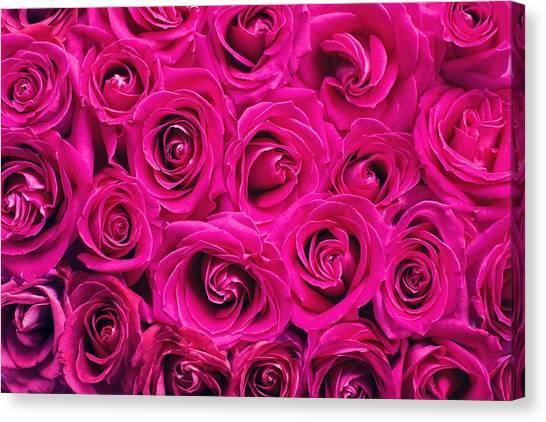 Magenta Roses Canvas Print