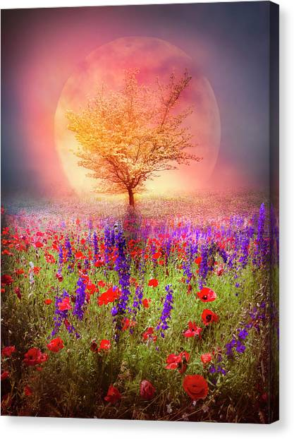 Poppys Canvas Print - Magical Moon In The Poppies by Debra and Dave Vanderlaan