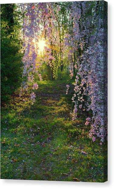 Canvas Print featuring the photograph Magnolia Tree Sunset by Nathan Bush