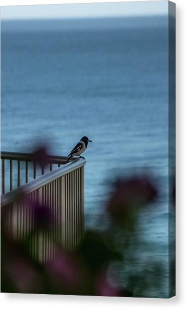 Magpie Bird Canvas Print