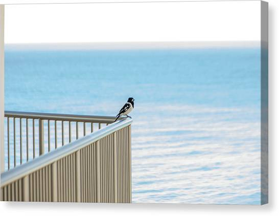 Magpie In Waiting Canvas Print