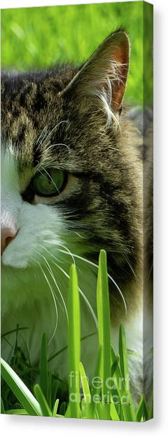 Canvas Print featuring the photograph Maine Coon Cat Photo A111018 by Mas Art Studio