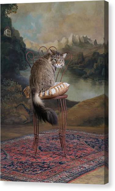 Maine Coon Cat Sitting On Chair Canvas Print