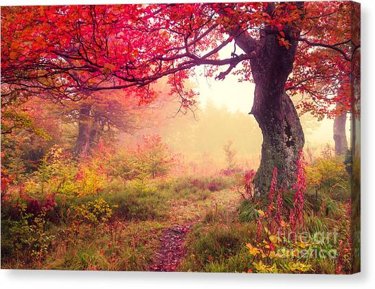 Woodland Canvas Print - Majestic Landscape With Autumn Trees In by Creative Travel Projects