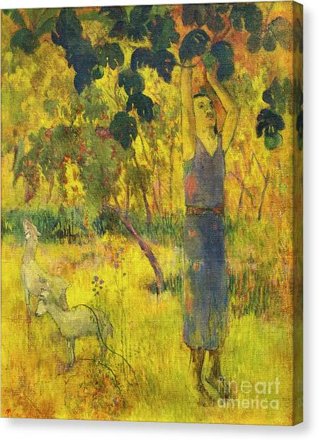 State Hermitage Canvas Print - Man Picking Fruit From A Tree by Peter Barritt
