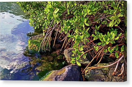 Mangrove Bath Canvas Print
