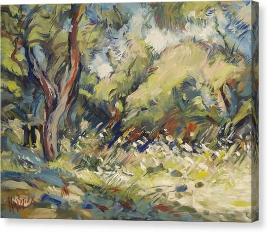 Marmari Olive Orchard Paxos Canvas Print
