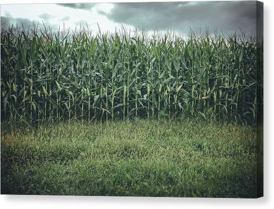 Canvas Print featuring the photograph Maze Field by Steve Stanger