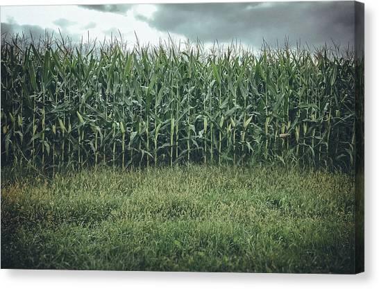 Maize Field Canvas Print