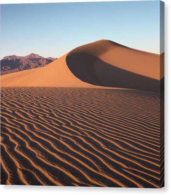 Mesquite Dunes 1-sq Canvas Print
