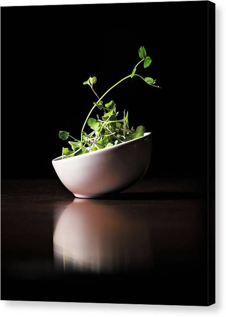 Micro Greens Canvas Print