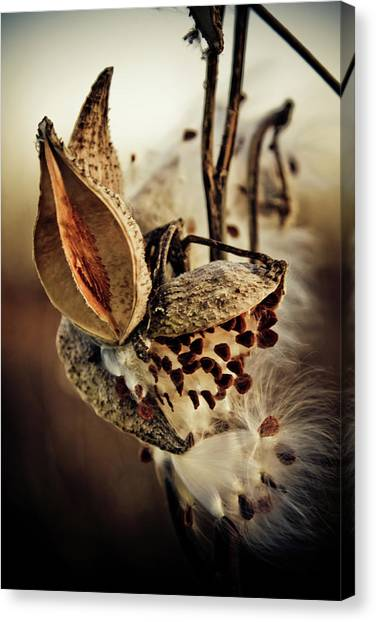 Canvas Print featuring the photograph Milk Pod In Magic Light 5 by Tatiana Travelways
