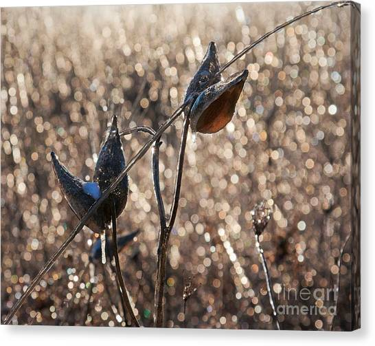 Canvas Print featuring the photograph Milk Pods In A Field Of Sparkling Light by Tatiana Travelways