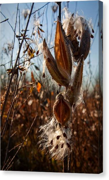 Canvas Print featuring the photograph Milk Pods In Magic Light 2 by Tatiana Travelways