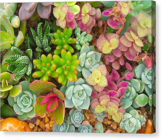 Perennial Canvas Print - Miniature Succulent Plants by Dinodentist
