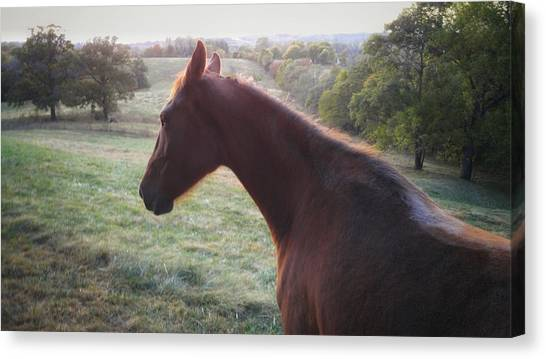 Canvas Print featuring the photograph Misty by Carl Young