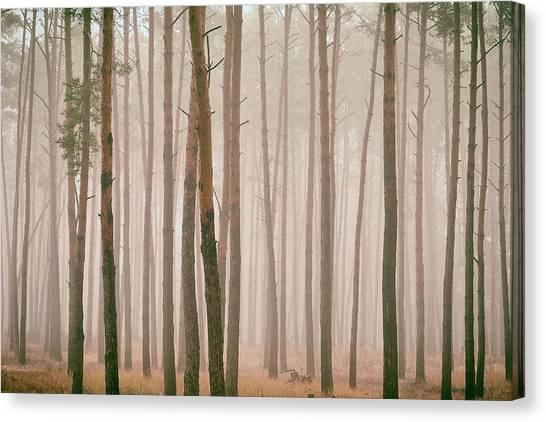Misty Pines. Horytsya, 2018. Canvas Print