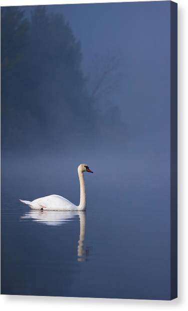 Canvas Print featuring the photograph Misty River Swan 2 by Davor Zerjav