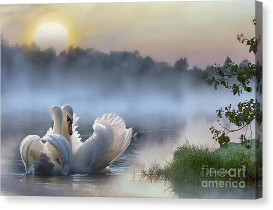 Misty Swan Lake Canvas Print
