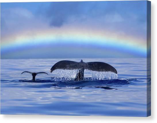 Mom And Calf Humpback Whales Off Maui Canvas Print