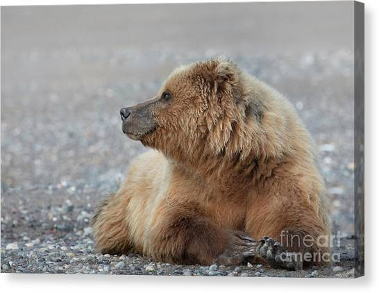 7bff0ec6 Brown Bear Cubs Canvas Print - Momma Bear Keeping And Eye Out For Trouble  by Linda