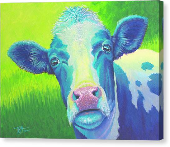 Moo Now Blue Cow Canvas Print