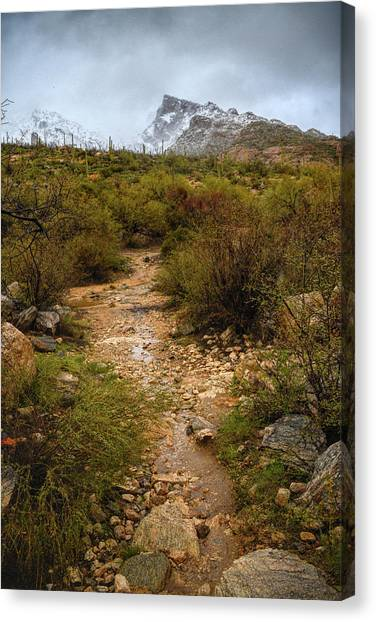 Moody Creekbed  Canvas Print