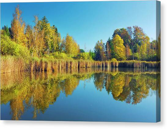 Moor Pond With Birches In Autumn Canvas Print