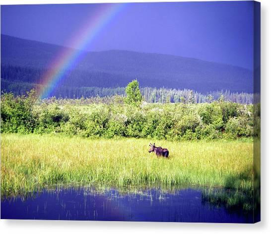 Marsh Grass Canvas Print - Moose In Marsh by Christopher Kimmel