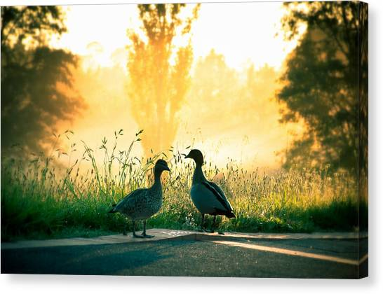 Canberra Canvas Print - Morning Banter by Max Photography