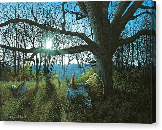 Morning Chat - Turkey Canvas Print