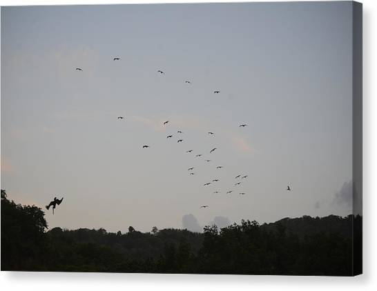 Morning Flock Rise Canvas Print
