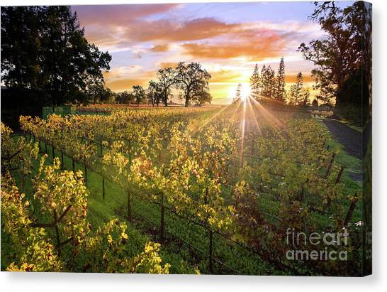 Sonoma Valley Canvas Print - Morning In Napa by Jon Neidert