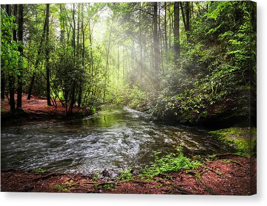 Canvas Print - Morning Light In The Forest by Debra and Dave Vanderlaan