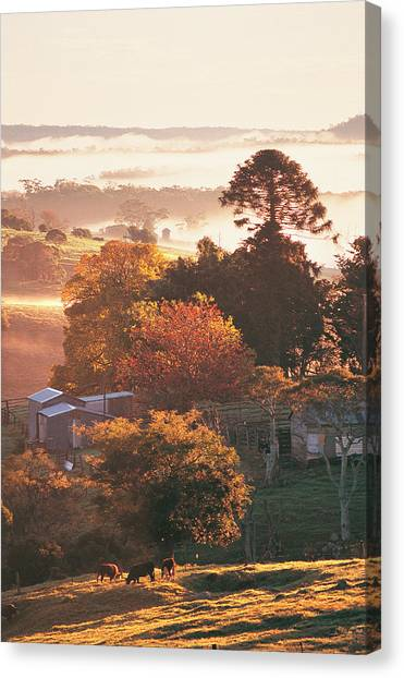 Morning Mist Over South Coast Farmland Canvas Print by Auscape / Uig